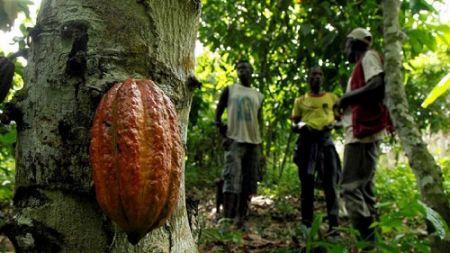 Sierra Leone : l'investisseur londonien AgDevCo s'engage sur un investissement de 3 millions $ dans le secteur de l'agro-industrie