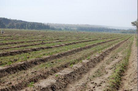EXEO Capital annonce la clôture finale de son deuxième fonds Agri-Vie Fund II avec des engagements de 146 millions $