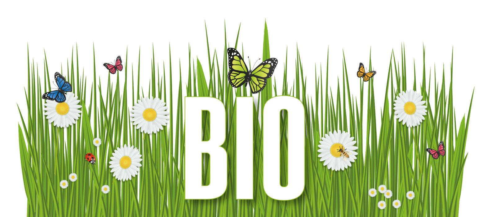 Pourquoi les produits écologiques ont-ils la cote ?