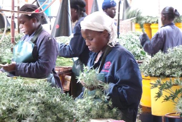 Nordfund et un investisseur appuyé par l'assureur sud-africain Sanlam dans un projet de 17 millions $ en Afrique de l'est