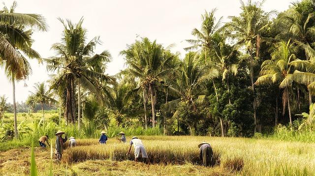 Accord avec l'Indonésie : un accord exemplaire qui profitera à une économie genevoise tournée vers l'exportation